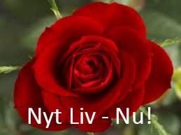 Nyt Liv Rosen i rød